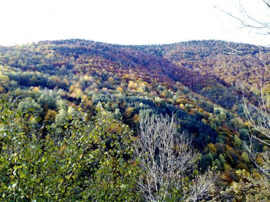 avant l'hiver, la forêt se prépare