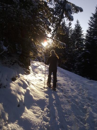 premiers rayons de soleil dans la forêt...